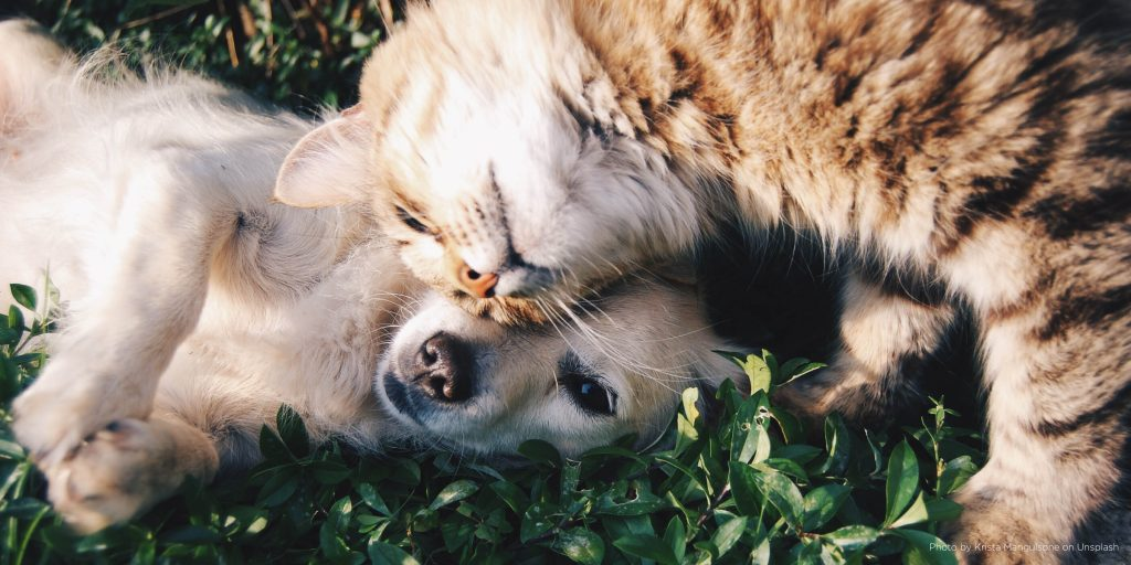 Pawsome benefits of owning a pet